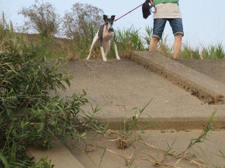 2013 8 14ココアと長良川2