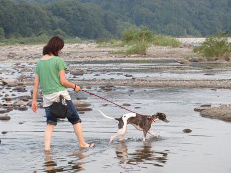 2013 8 14ココアと長良川15