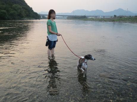 2013 8 14ココアと長良川18