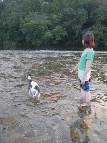 2013 8 14ココアと長良川19