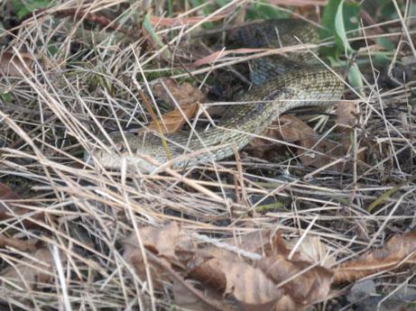 2013 8 16ヘビ1