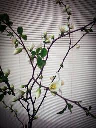 2013-03-28-13-37-41_deco.jpg