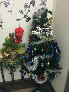 アポロのクリスマスツリー♪