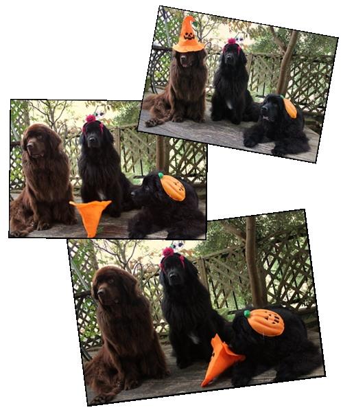cats helloween