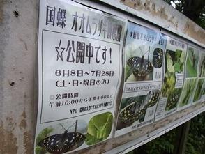 130725オオムラサキ観察園 (1) - コピー