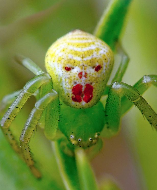 £££ Spider that looks like a clown-1704762