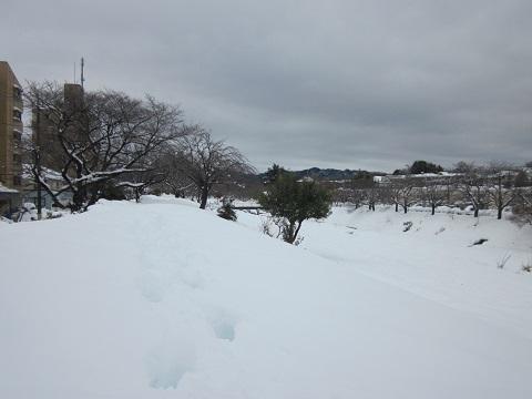 2014雪3