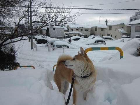 2014雪24