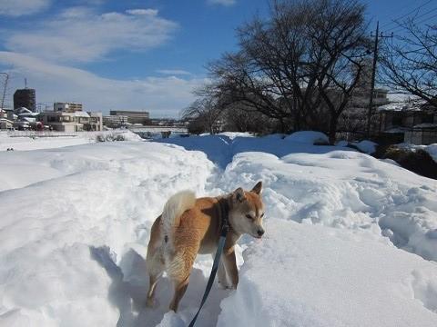 2014雪52