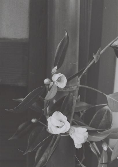 京都 お花 m