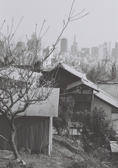 神戸の街と梅 梅 m