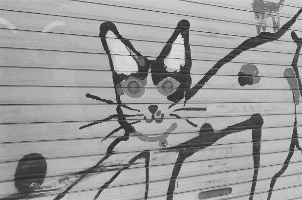 ネコちゃんと! 神戸 m
