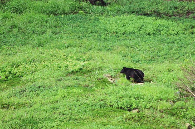 2013.08.09 bear