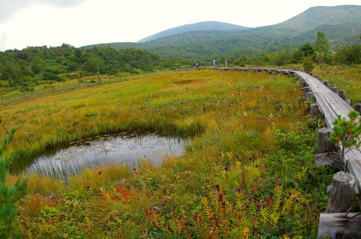 秋色 浄土平湿原