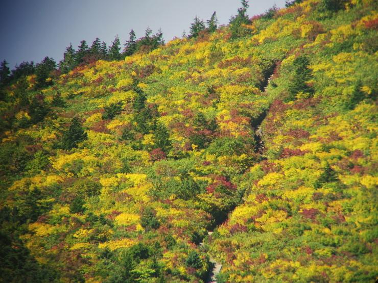 黄葉蓬莱山
