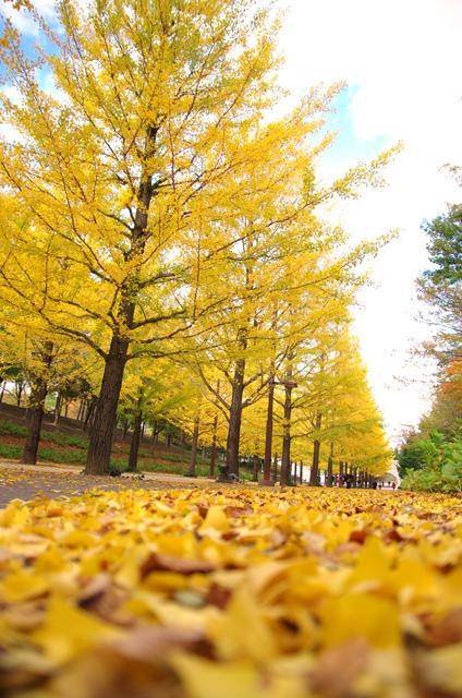 落葉から見上げる