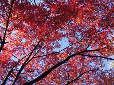 momiji_2013113000370510f.jpg