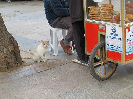 めずらしい屋台の看板猫?