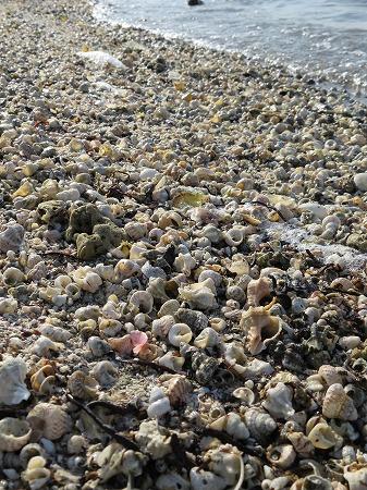 貝殻の打ち寄せる浜