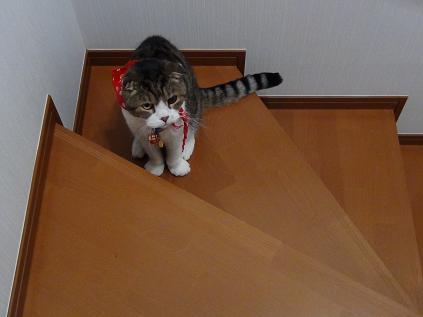 階段福ちゃん