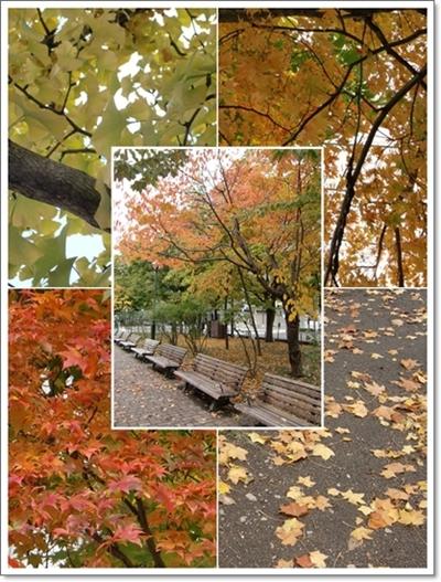 大通公園2013年10月