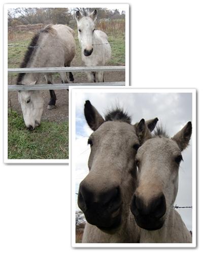 馬の親子2013年11月