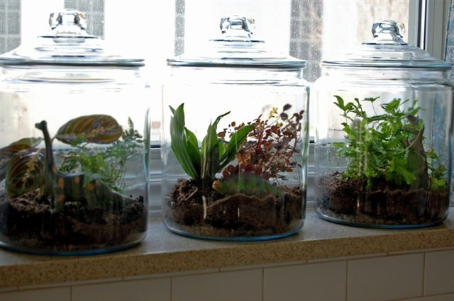 2008-04-02-terrarium.jpg