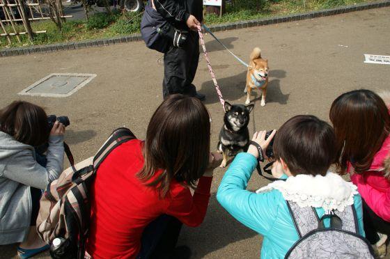 DSC02429_上野公園でお花見
