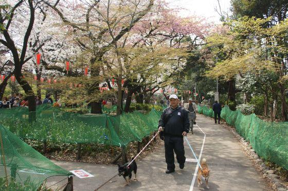 DSC02429_上野公園でお花見2