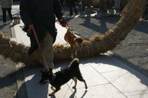 131 亀戸浅間神社の初詣