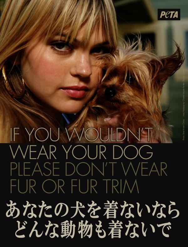 あなたの犬を着ないなら。。
