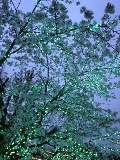 むさしの村桜緑