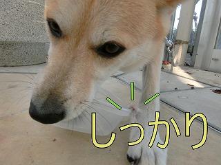 s-haru141027-CIMG3817
