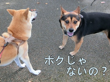 s-kuro141031-CIMG3312