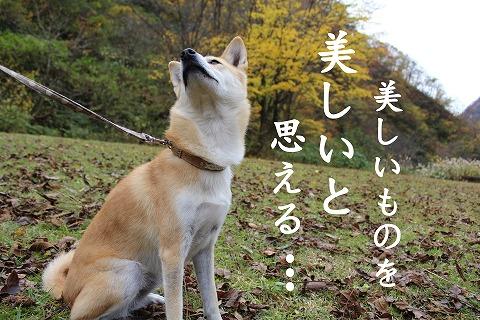 s-kouyou141213-IMG_4943