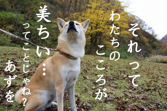s-kouyou141213-IMG_4944