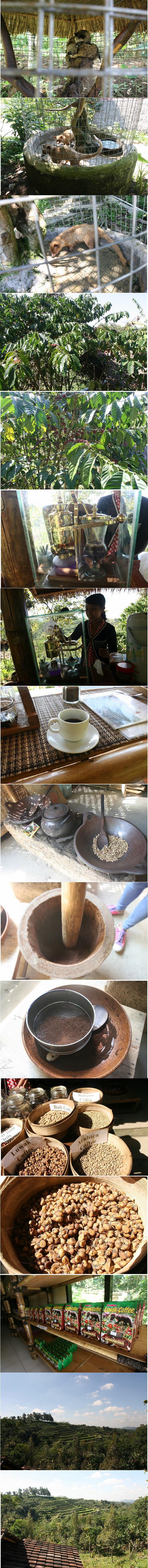 ルアックコーヒーブログサイズ