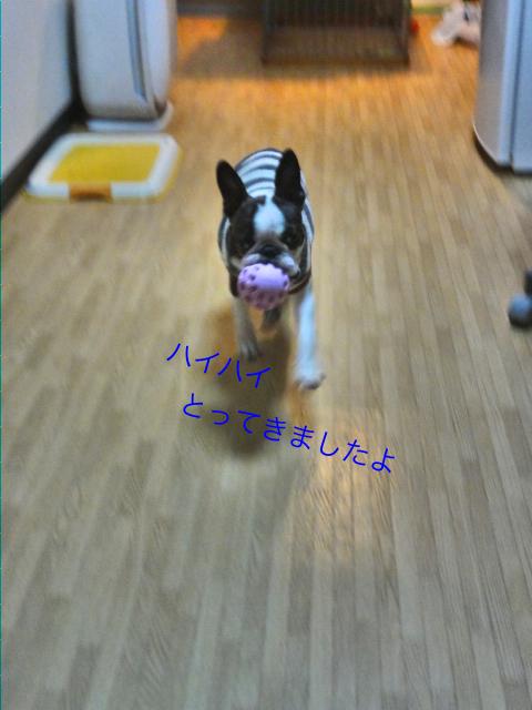 DSC07030_Fotor.jpg