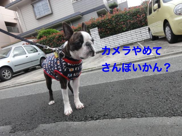 DSC07516_Fotor.jpg