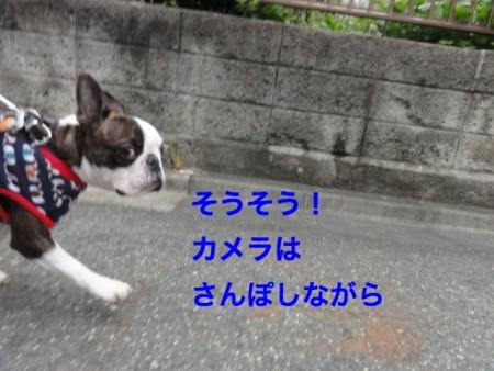 DSC07517_Fotor.jpg