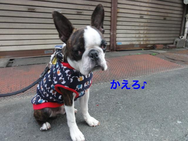 DSC07520_Fotor.jpg