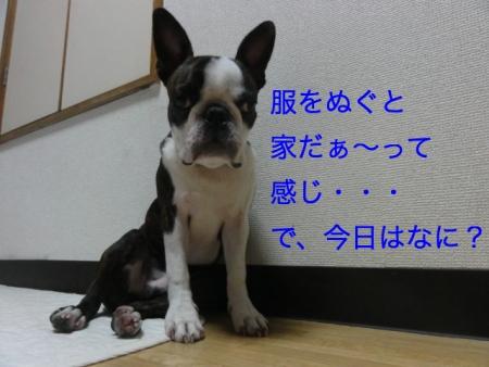 DSC07527_Fotor.jpg