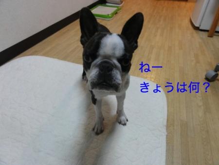 DSC07529_Fotor.jpg
