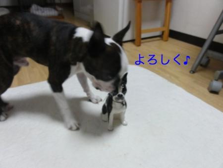 DSC07548_Fotor.jpg