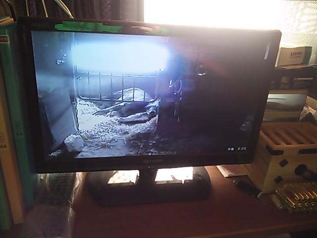 コムギの監視カメラ