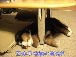 楽しかった疲れがでたの
