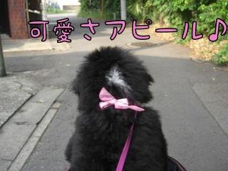 ピンクのリボン♪