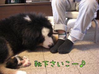 靴下たまんない