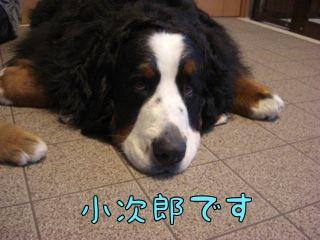 小次郎です