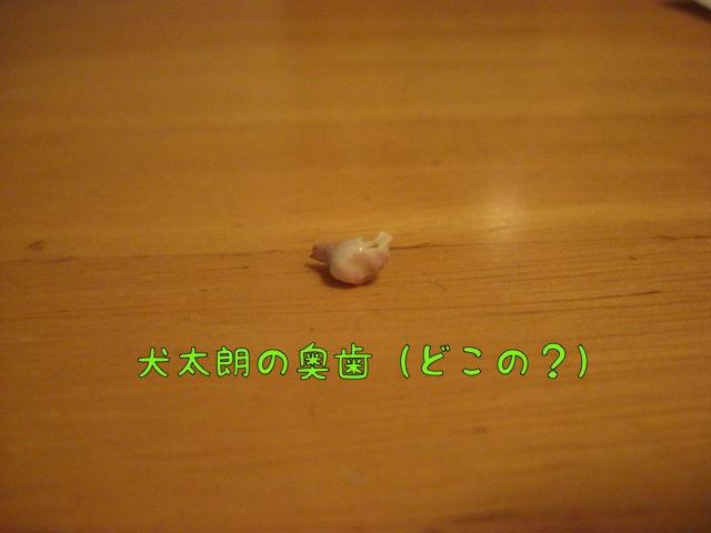 CIMG2532.jpg